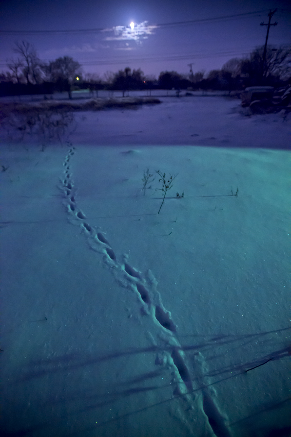 Critter tracks, 5:30 a.m. this morning in my snowy pasture.