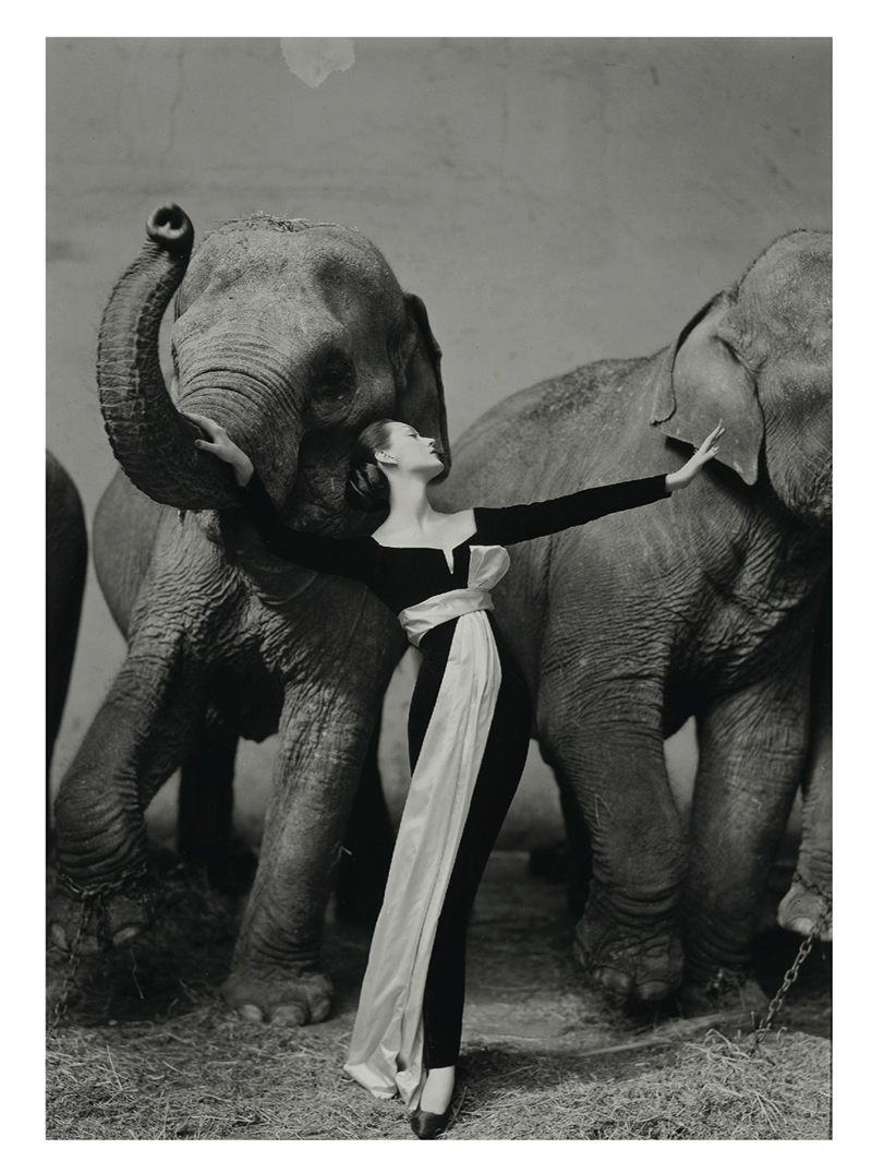 Dovima with elephants 1955 campaign for Dior by Richard Avedon.